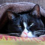 プレミアムマイクロファイバー毛布が気持ち良すぎるぞ!軽量で温かい、そして価格も安いのでおすすめです【mofua(モフア)レビュー】
