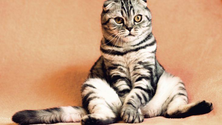 ペットがいるから旅行に行けない!自動給餌器や見守りカメラだけじゃない留守中の犬・猫のお世話アイデアまとめ